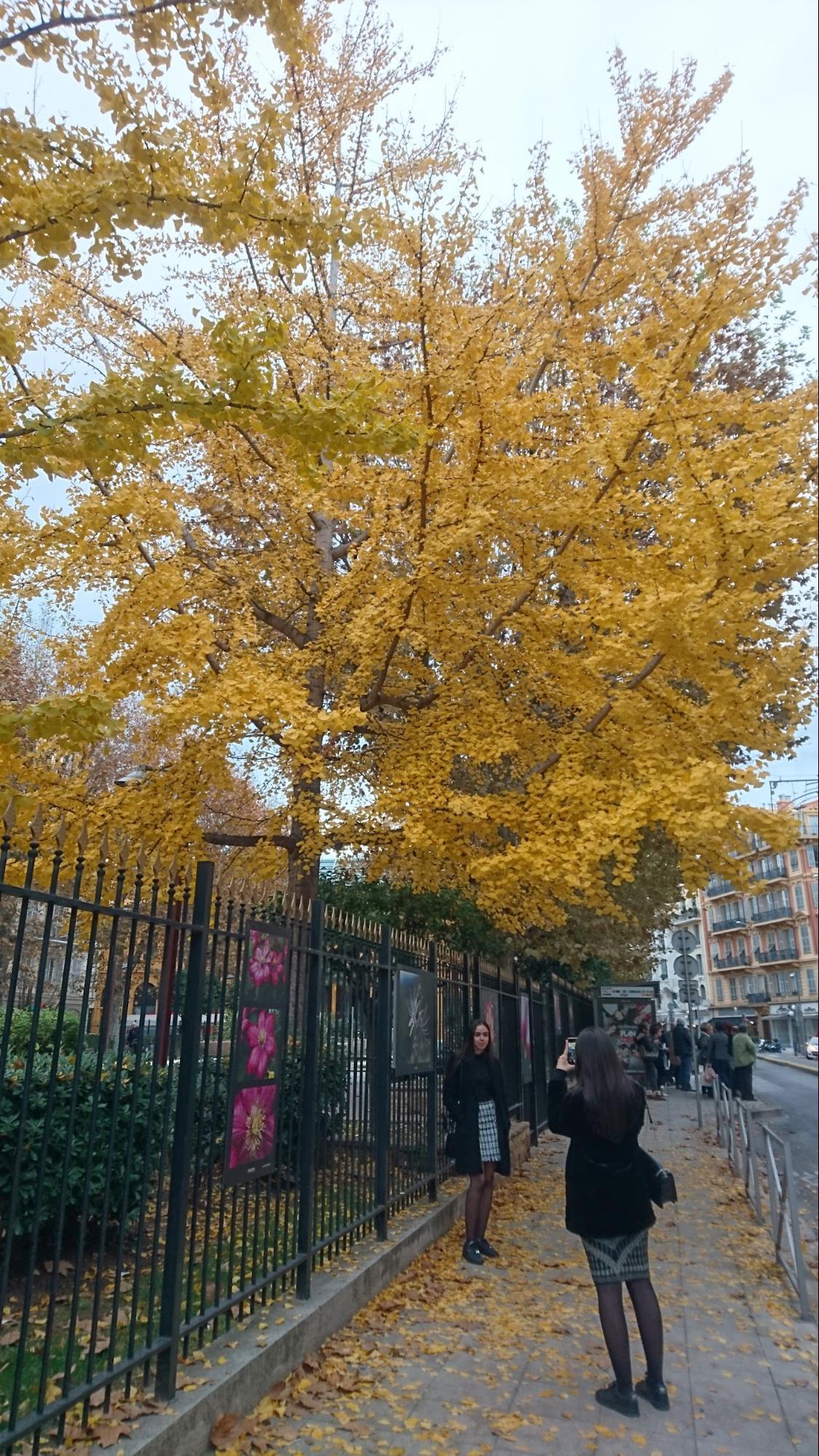 フランス・ニースの天気と気温、年間の気候と旅行中におすすめの服装