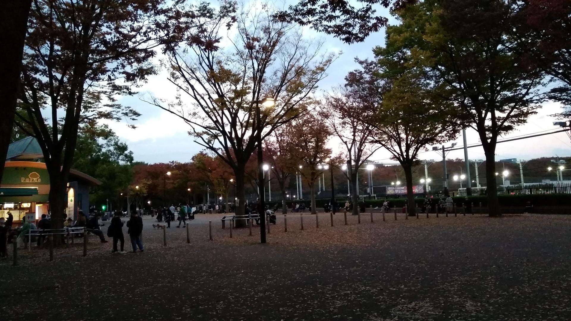 代々木公園 | 港区在住ナミさんのおすすめ観光スポット