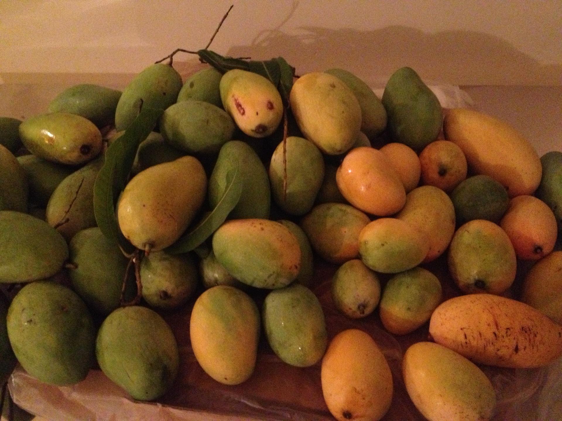 カンボジアのマンゴー | シェムリアップ在住シンギョウさんのおすすめスイーツ・お菓子