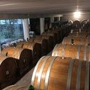 ヴェローナ在住のロコ、イタリア自然派ワインガイドさん