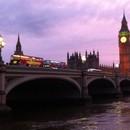 ロンドン在住のロコ、Lavenderさん