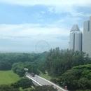 シンガポール在住のロコ、元気印さん