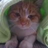 シャンハイ(上海)在住のロコ、猫助さん