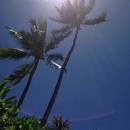 オアフ島(ハワイ)在住のロコ、にゃんこさん