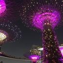 シンガポール在住のロコ、アヤカさん